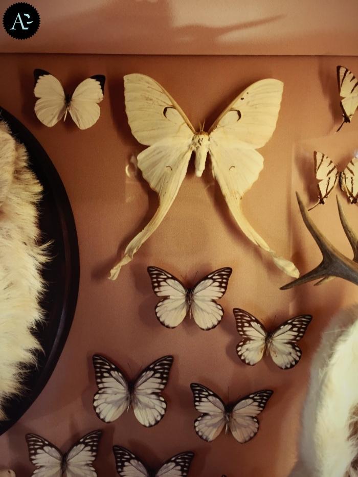 museo storia naturale | farfalle