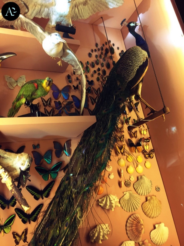 museo storia naturale | pavone