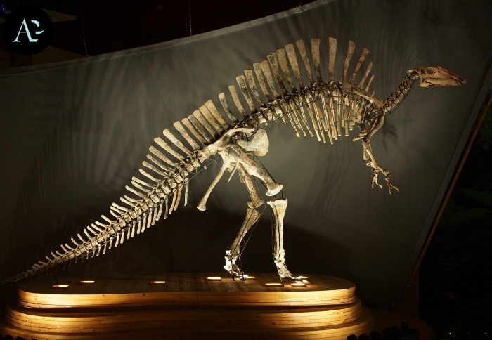museo storia naturale | dinosauro