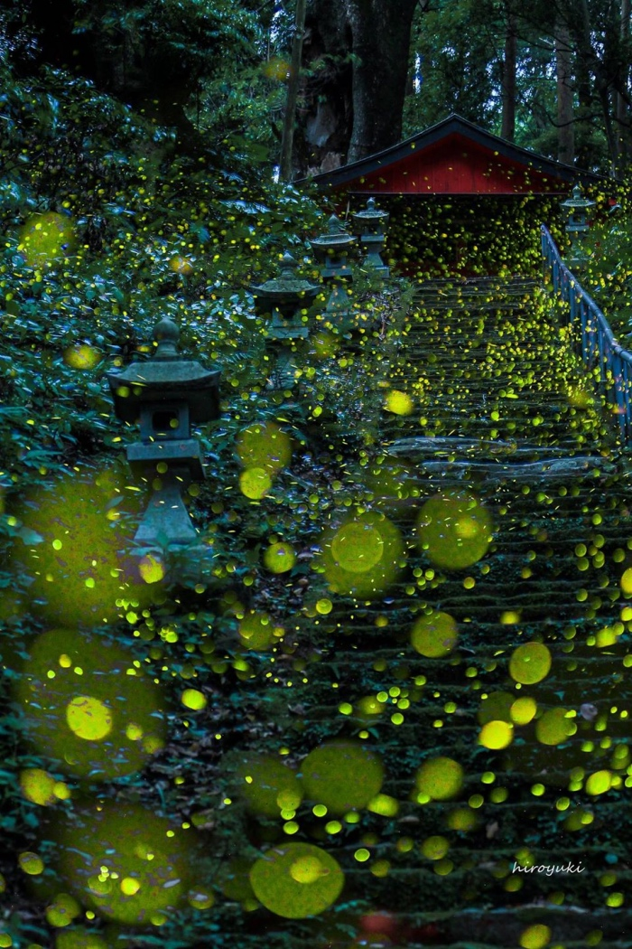 photographers   fireflies in Japan