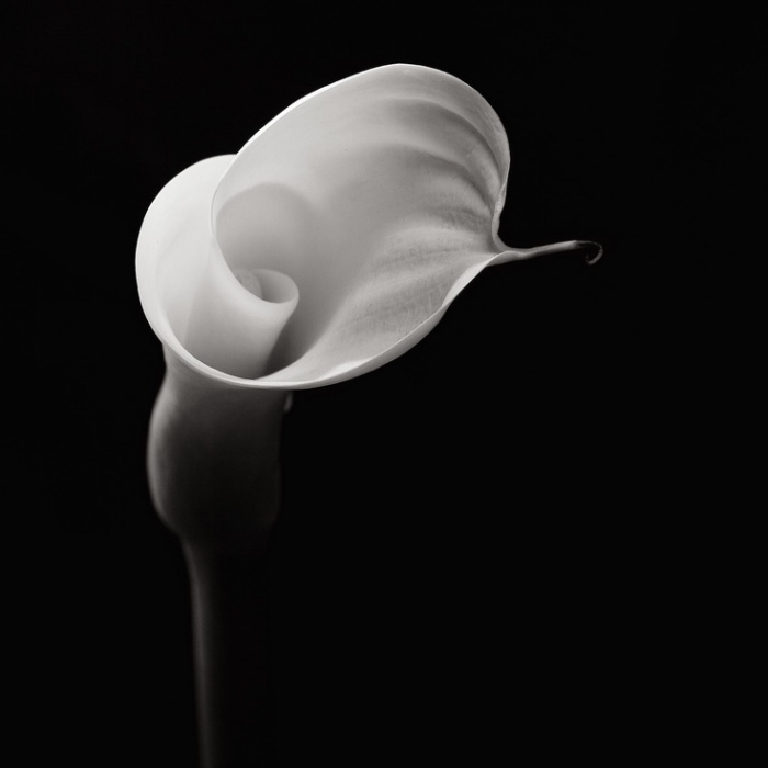 Robert Mapplethorpe | Black And White