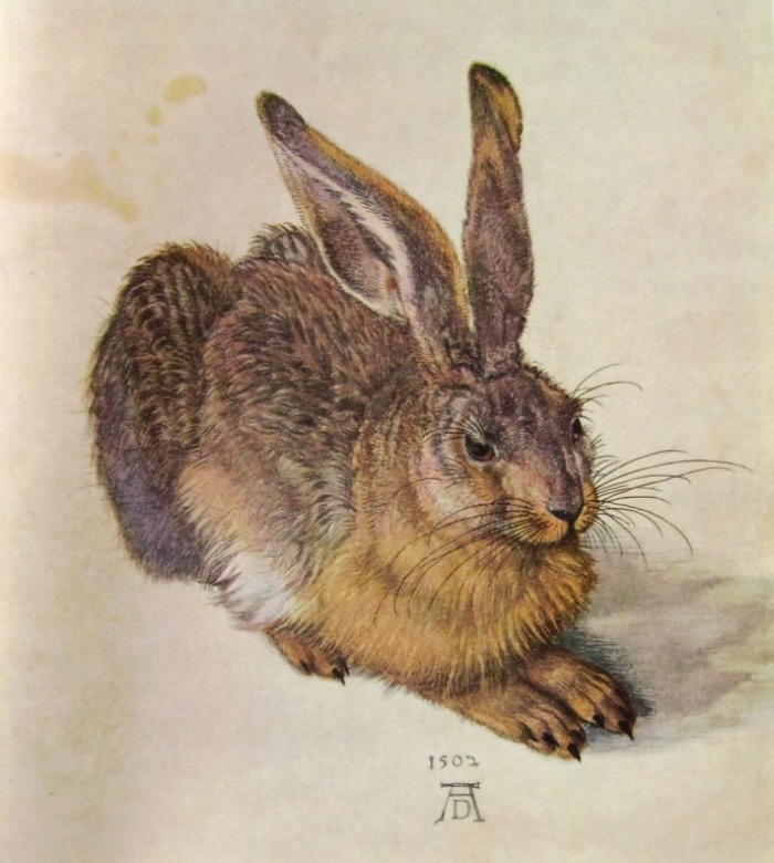Young Hare by Dürer | Albertina museum