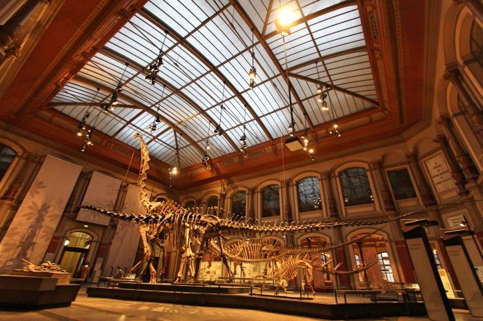 museo storia naturale | Musei Berlino