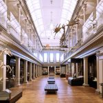 Australian Museum | musei Australia