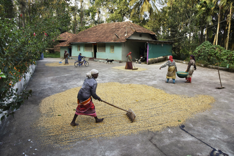 Women rake grains in a courtyard - Steve McCurry