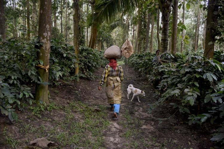 A woman walks through the jungle, while balancing a bag on her head - Steve McCurry