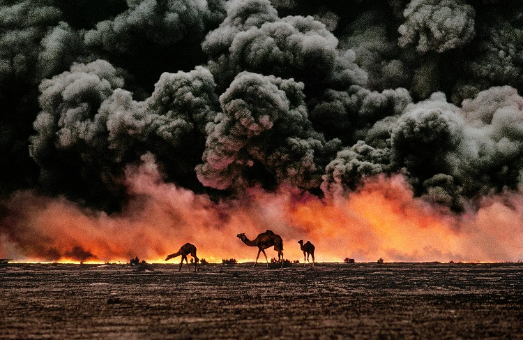 Cammelli e giacimenti di petrolio, Kuwait, 1991 (Camel and oil fields, Kuwait, 1991) ©Steve McCurry